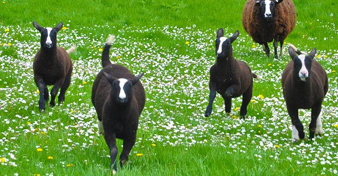 Kilkenny Zwartables Farm- Kerry & Kilkenny Irish Knitting and Craft Tour